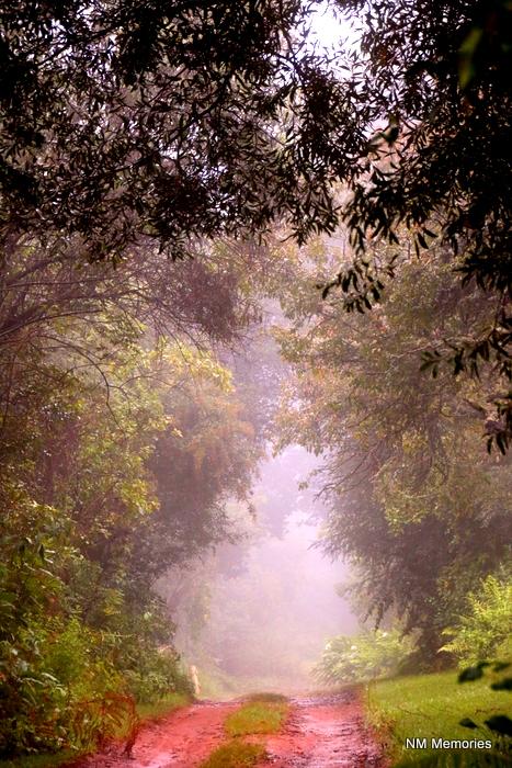 Mystical road in Mpumulanga